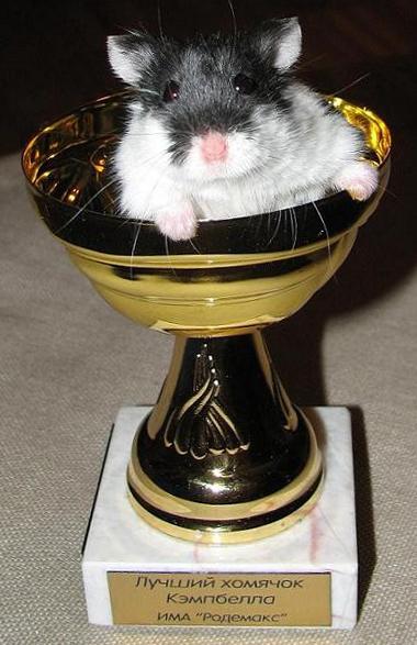 Кубок от Спонсора Породы