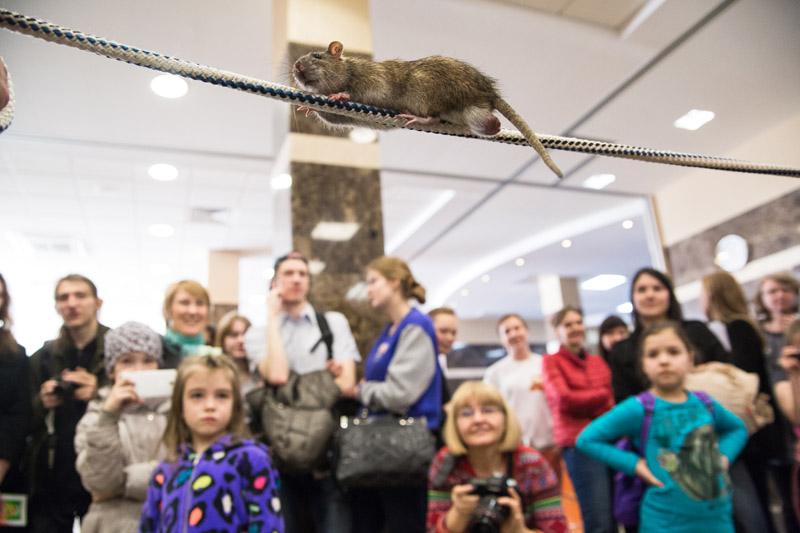 ЗооПалитра в Санкт-Петербурге 19 апреля 2014